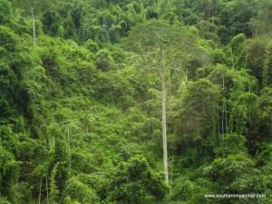 Tanintharyi nature